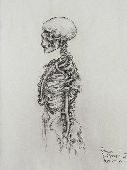 studie kostry